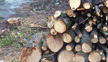 drevo-ilustracne-foto
