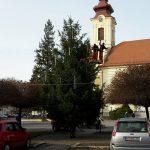 Vinočný stromček na a Hlavnom námestí počas výzdoby